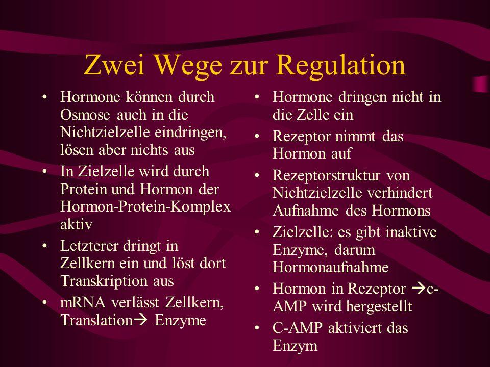 Zwei Wege zur Regulation