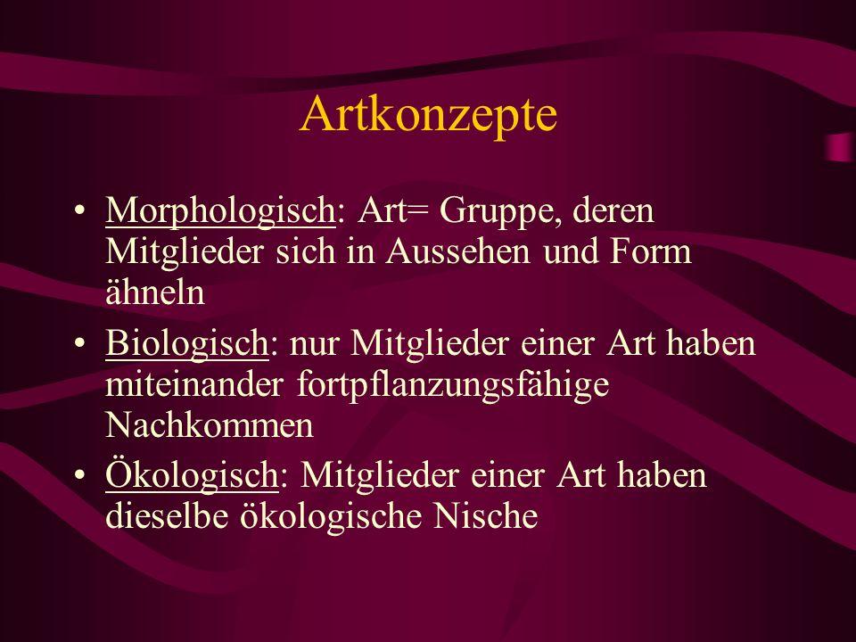 Artkonzepte Morphologisch: Art= Gruppe, deren Mitglieder sich in Aussehen und Form ähneln.