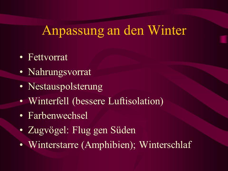 Anpassung an den Winter