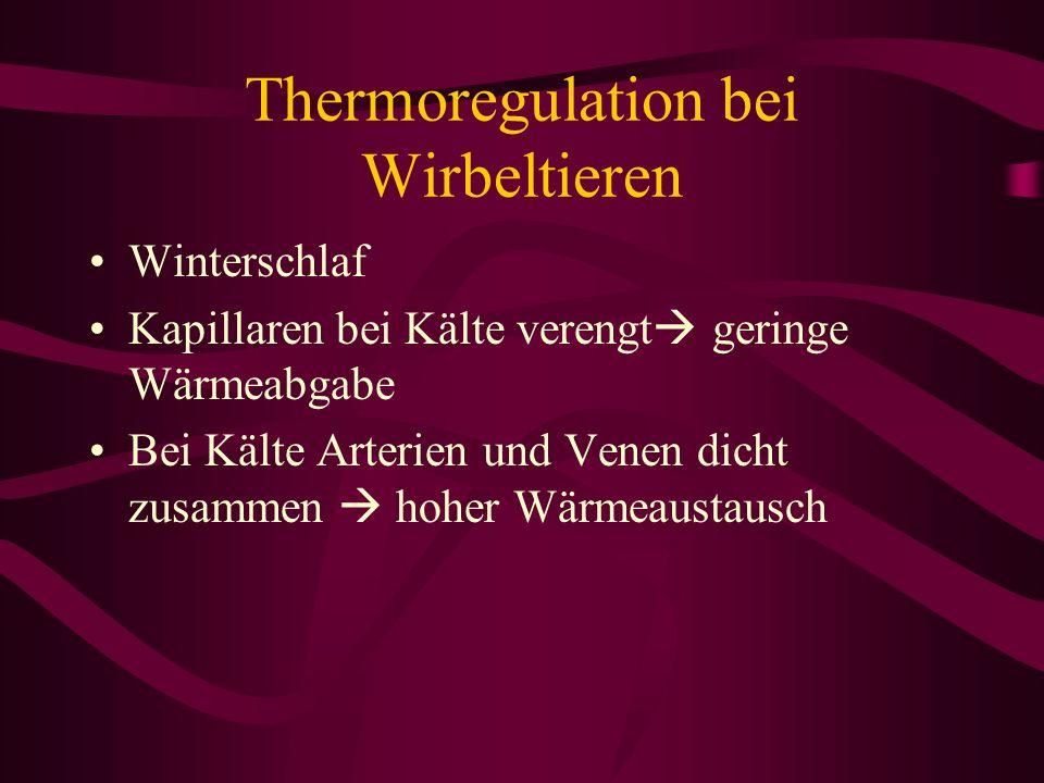 Thermoregulation bei Wirbeltieren