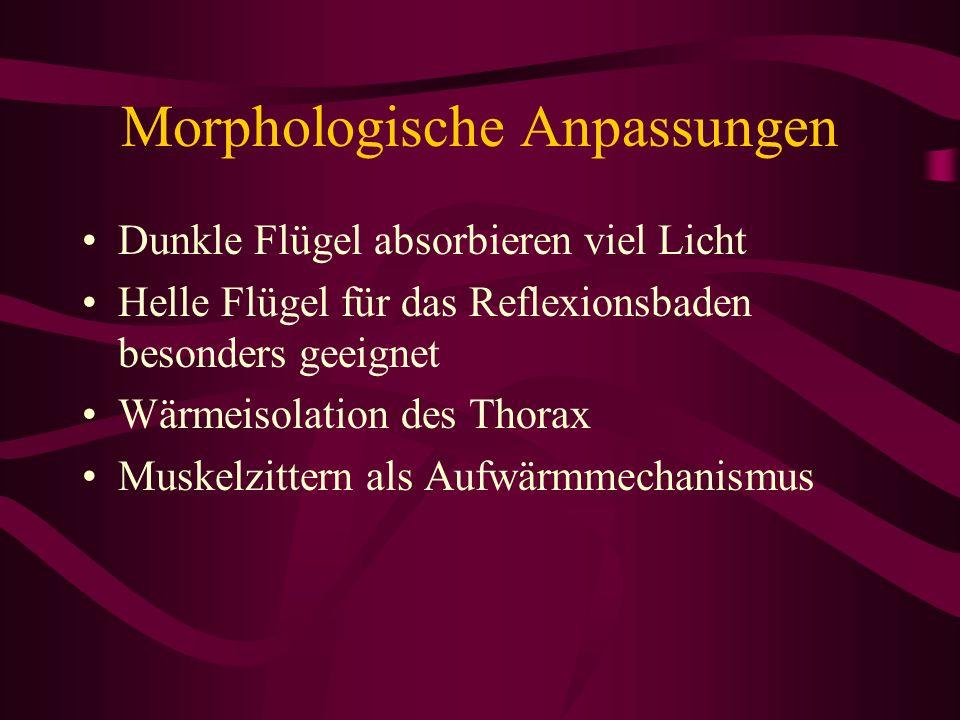 Morphologische Anpassungen