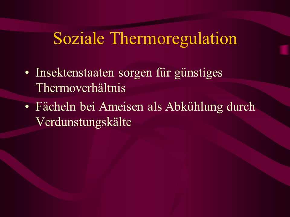 Soziale Thermoregulation