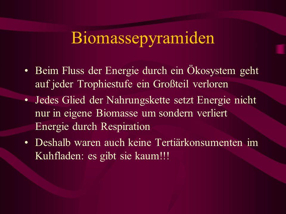 Biomassepyramiden Beim Fluss der Energie durch ein Ökosystem geht auf jeder Trophiestufe ein Großteil verloren.