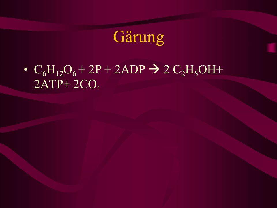 Gärung C6H12O6 + 2P + 2ADP  2 C2H5OH+ 2ATP+ 2CO²