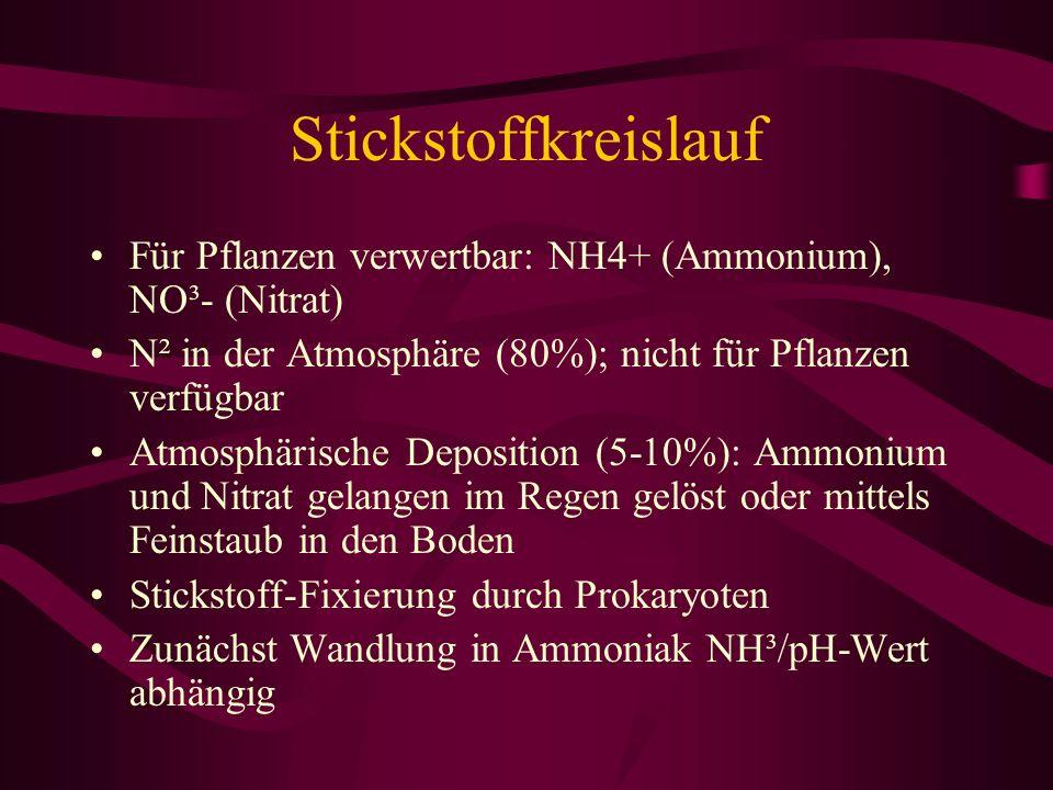 Stickstoffkreislauf Für Pflanzen verwertbar: NH4+ (Ammonium), NO³- (Nitrat) N² in der Atmosphäre (80%); nicht für Pflanzen verfügbar.