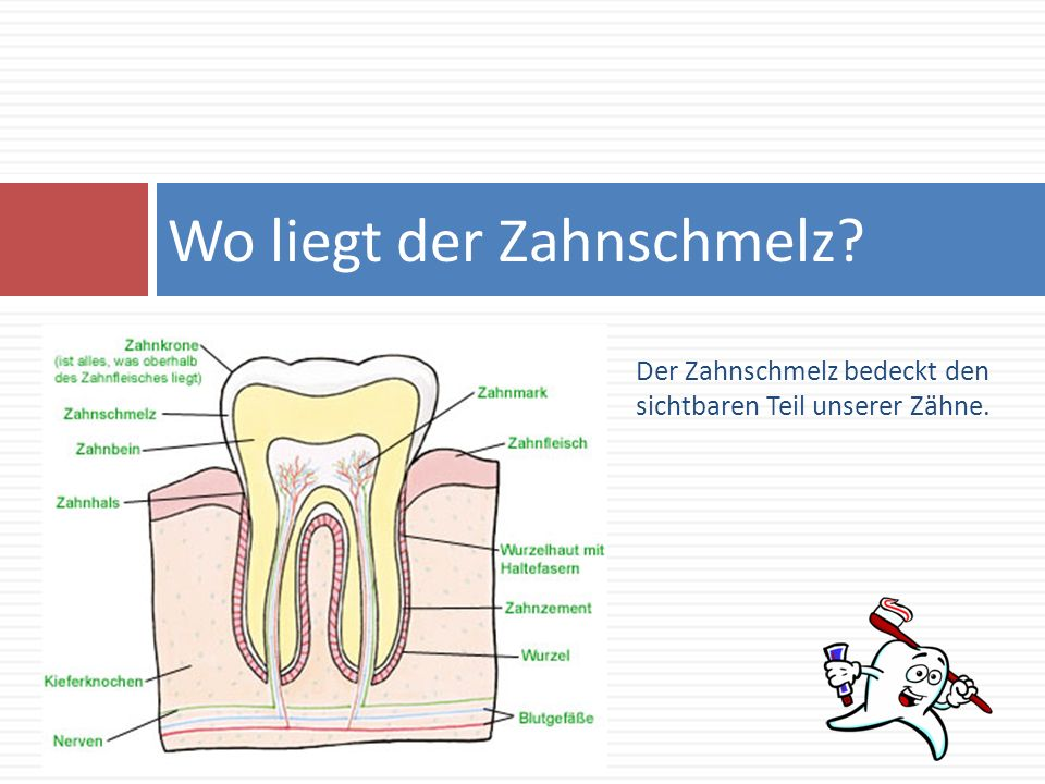 Wo liegt der Zahnschmelz