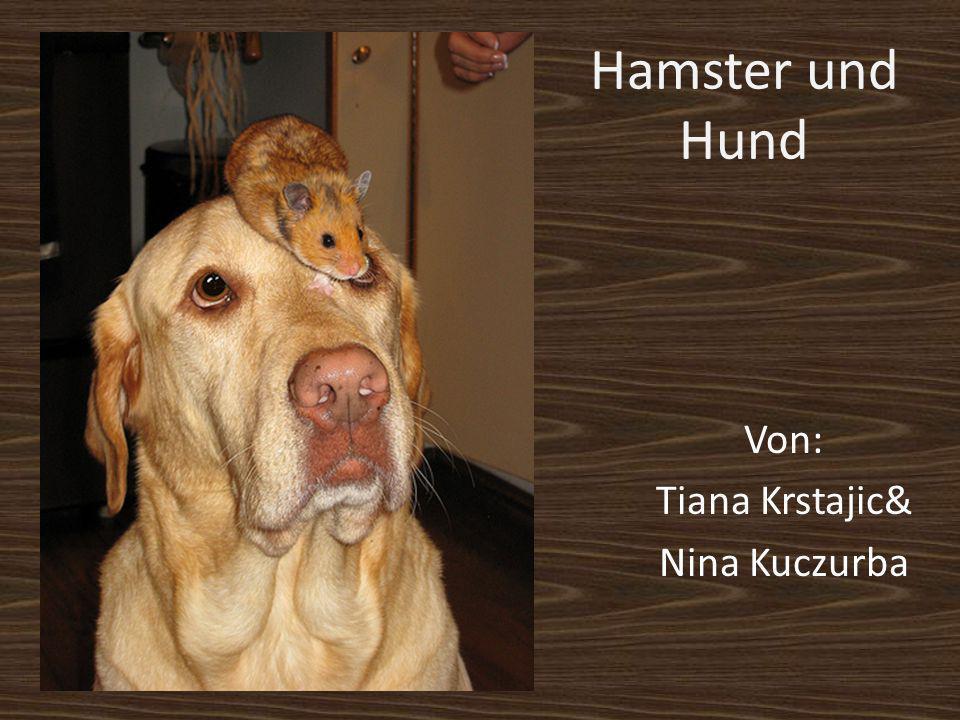 Von: Tiana Krstajic& Nina Kuczurba