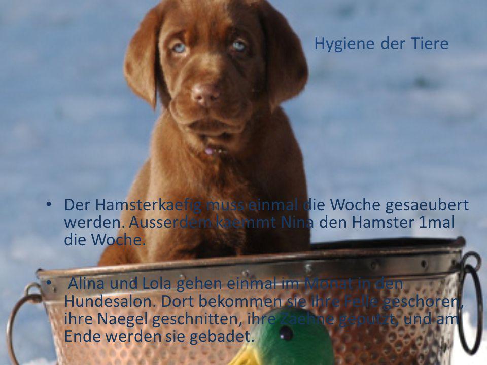 Hygiene der Tiere Der Hamsterkaefig muss einmal die Woche gesaeubert werden. Ausserdem kaemmt Nina den Hamster 1mal die Woche.