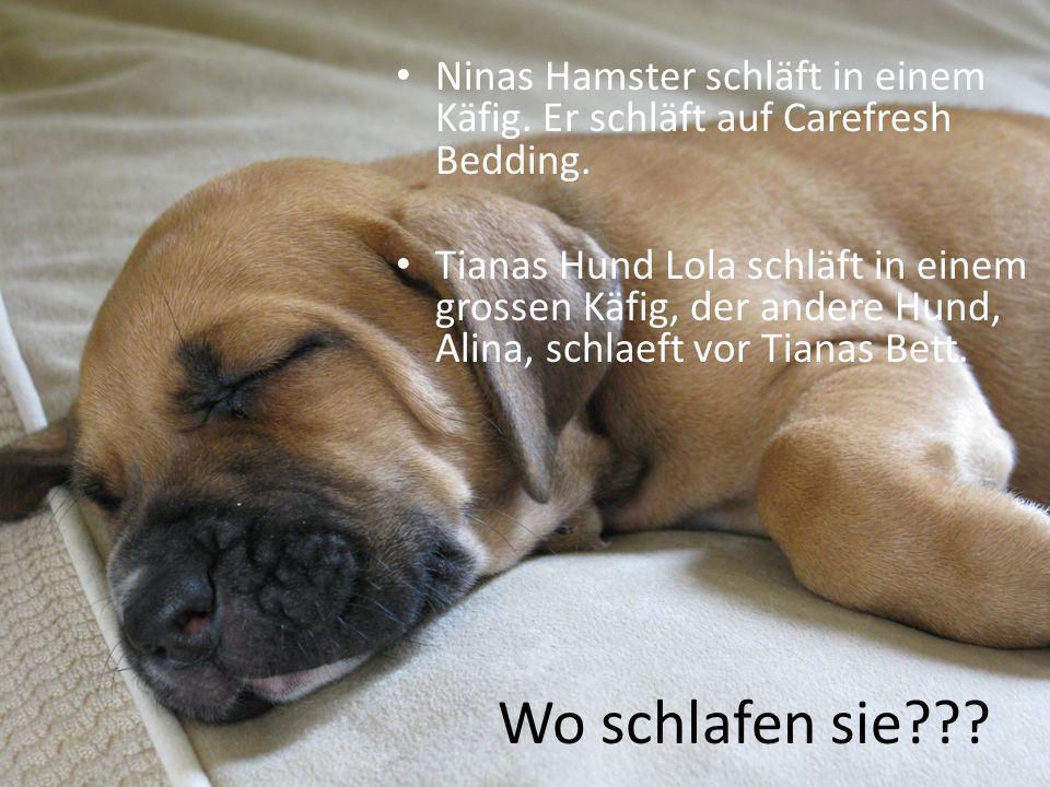 Ninas Hamster schläft in einem Käfig. Er schläft auf Carefresh Bedding.