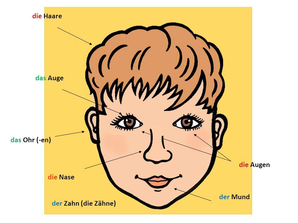 die Haare das Auge das Ohr (-en) die Augen die Nase der Mund der Zahn (die Zähne)