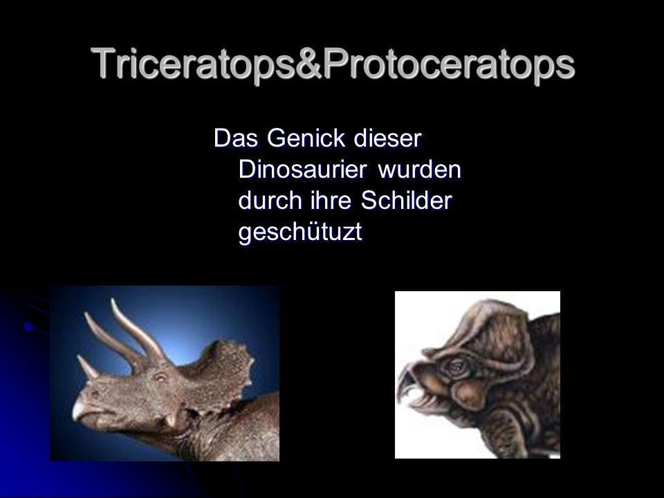 Triceratops&Protoceratops