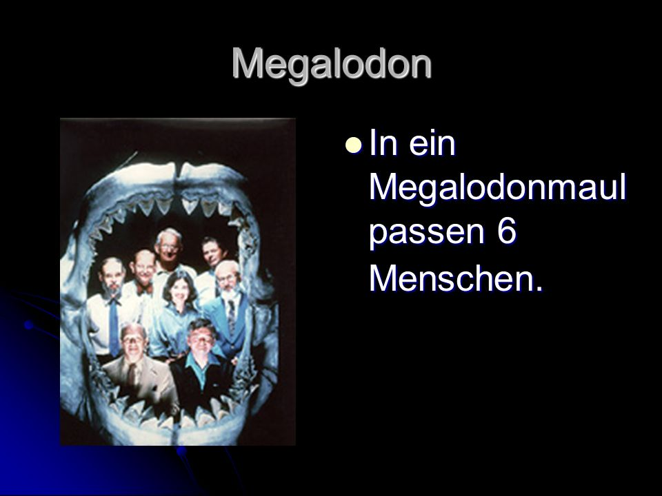 Megalodon In ein Megalodonmaul passen 6 Menschen.