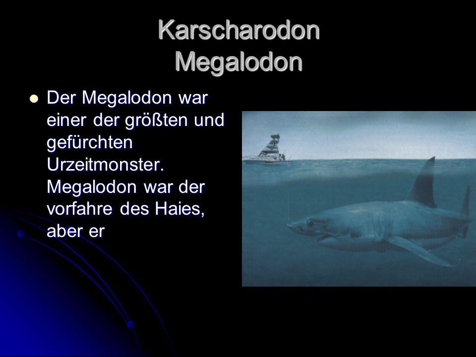 Karscharodon Megalodon