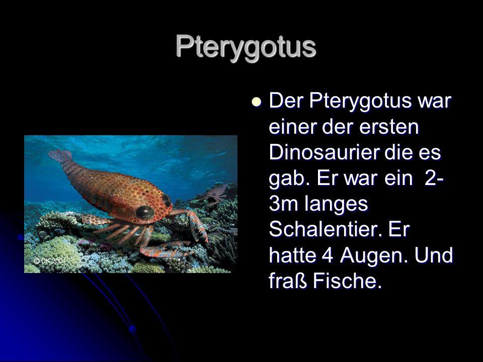 Pterygotus Der Pterygotus war einer der ersten Dinosaurier die es gab.