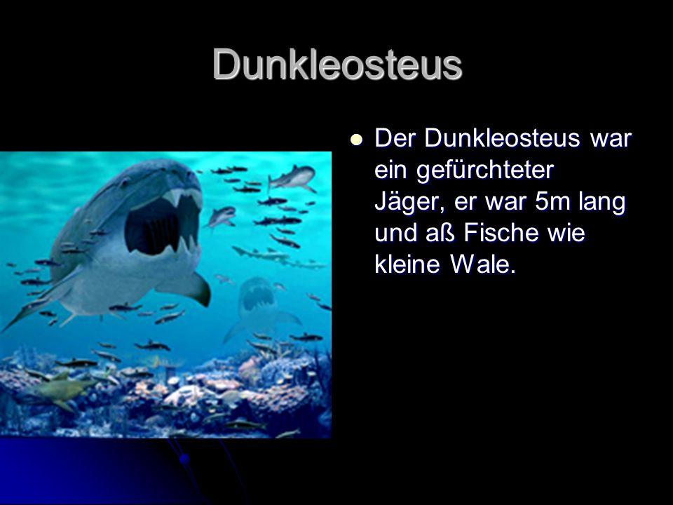 Dunkleosteus Der Dunkleosteus war ein gefürchteter Jäger, er war 5m lang und aß Fische wie kleine Wale.