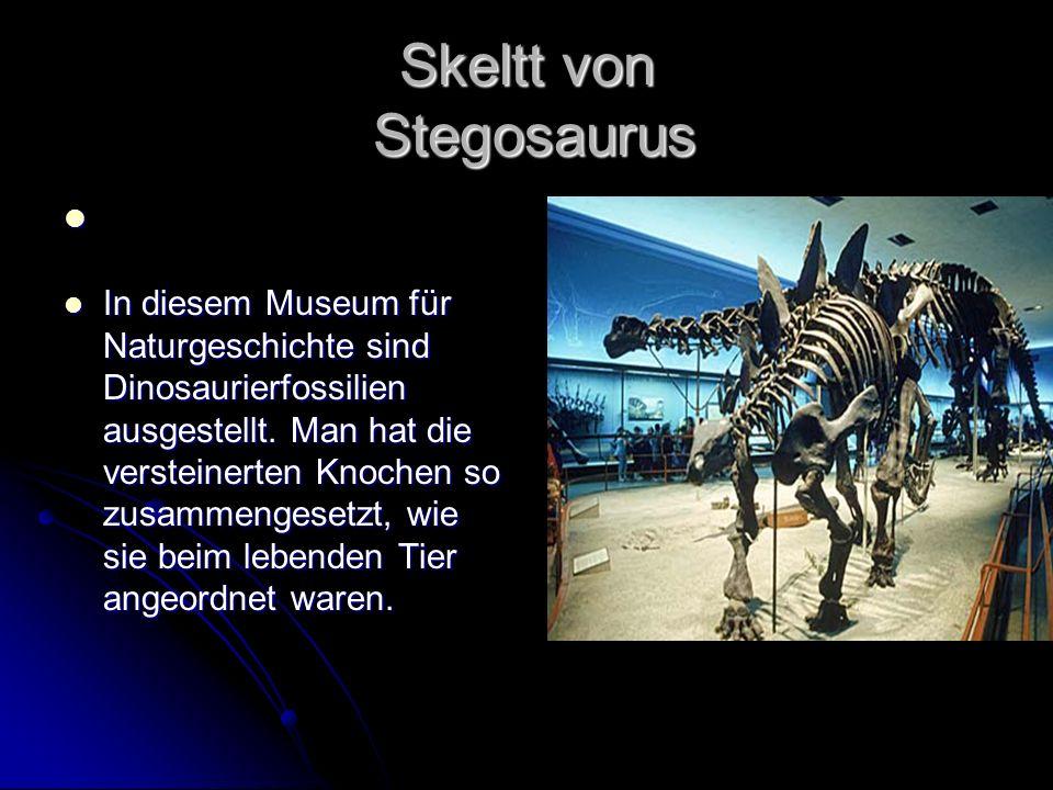 Skeltt von Stegosaurus