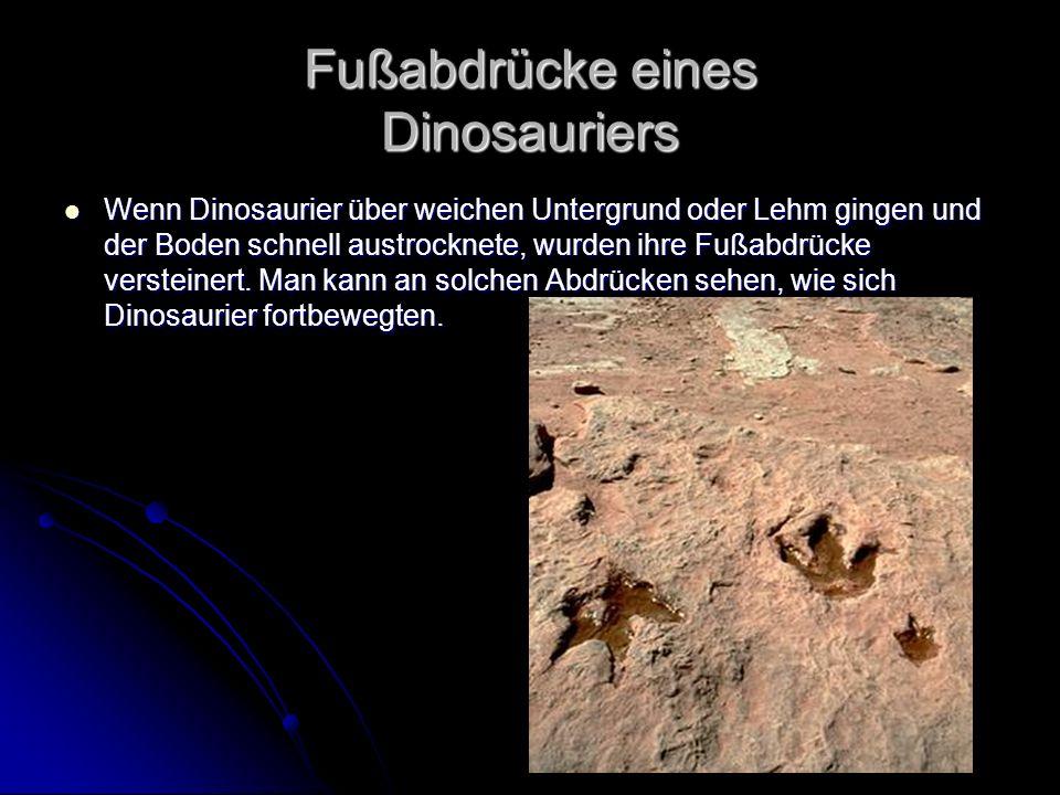 Fußabdrücke eines Dinosauriers
