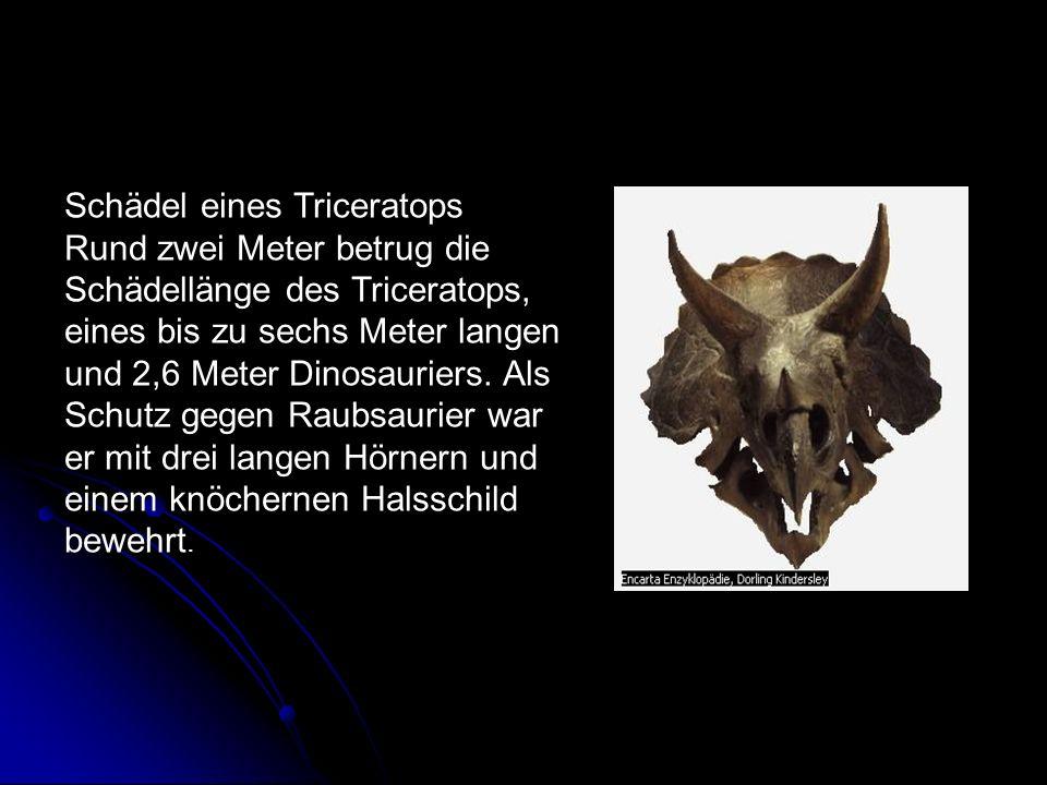 Schädel eines Triceratops