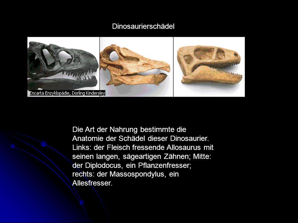 Dinosaurierschädel