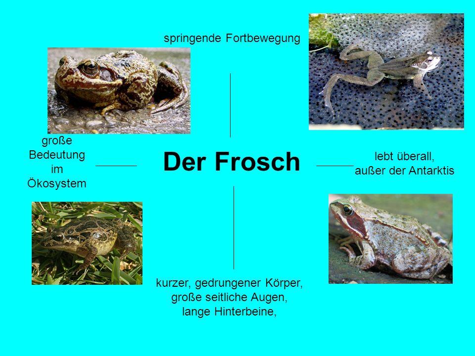 Der Frosch springende Fortbewegung große Bedeutung im Ökosystem
