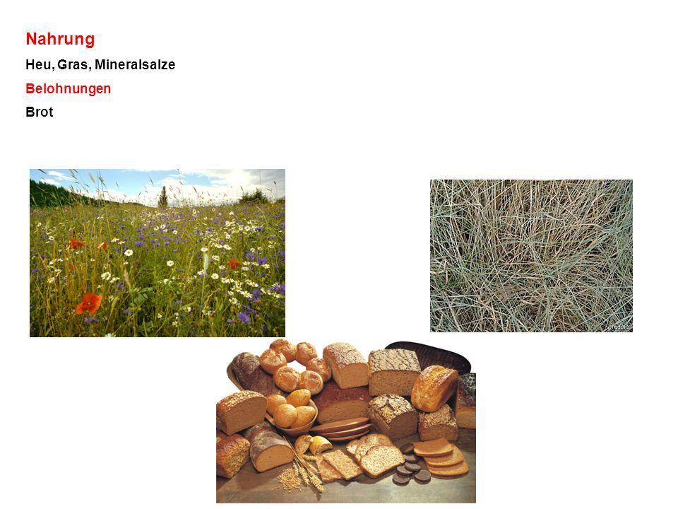 Nahrung Heu, Gras, Mineralsalze Belohnungen Brot