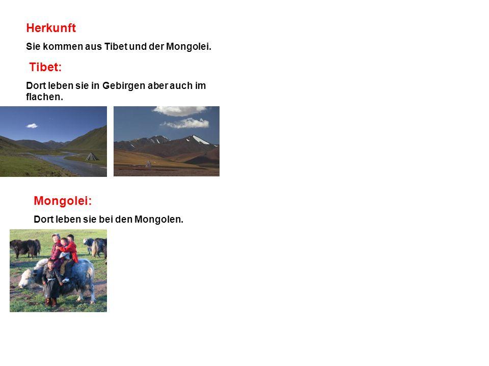 Herkunft Mongolei: Sie kommen aus Tibet und der Mongolei. Tibet:
