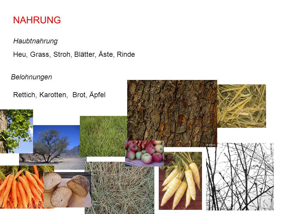 NAHRUNG Haubtnahrung Heu, Grass, Stroh, Blätter, Äste, Rinde
