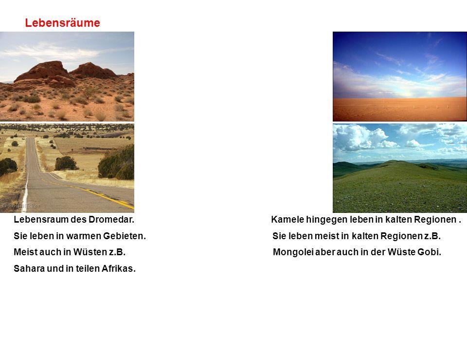 Lebensräume Lebensraum des Dromedar. Kamele hingegen leben in kalten Regionen .