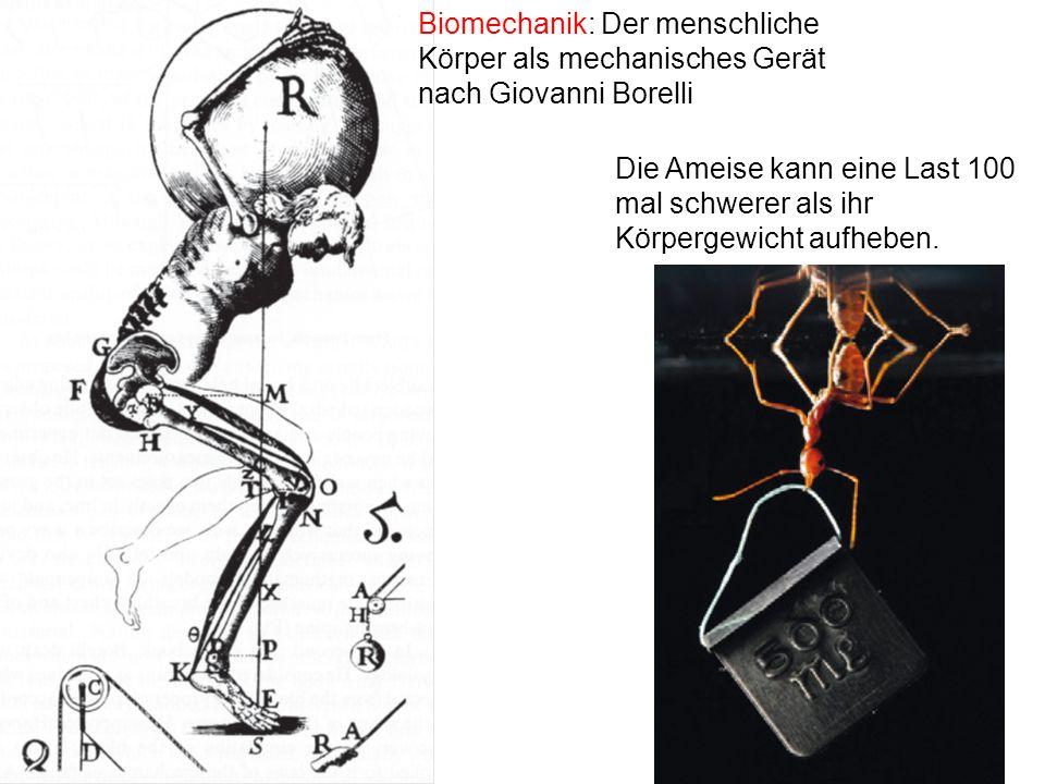 Biomechanik: Der menschliche Körper als mechanisches Gerät nach Giovanni Borelli