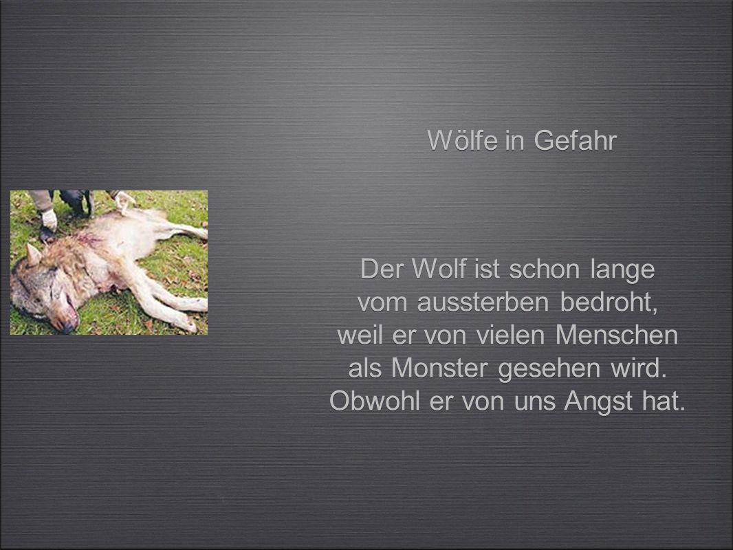 Der Wolf ist schon lange vom aussterben bedroht,