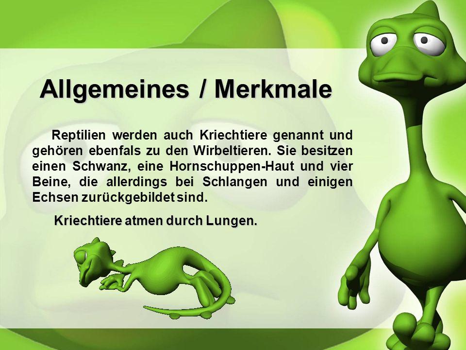 Allgemeines / Merkmale