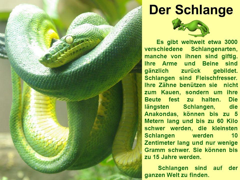 Der Schlange