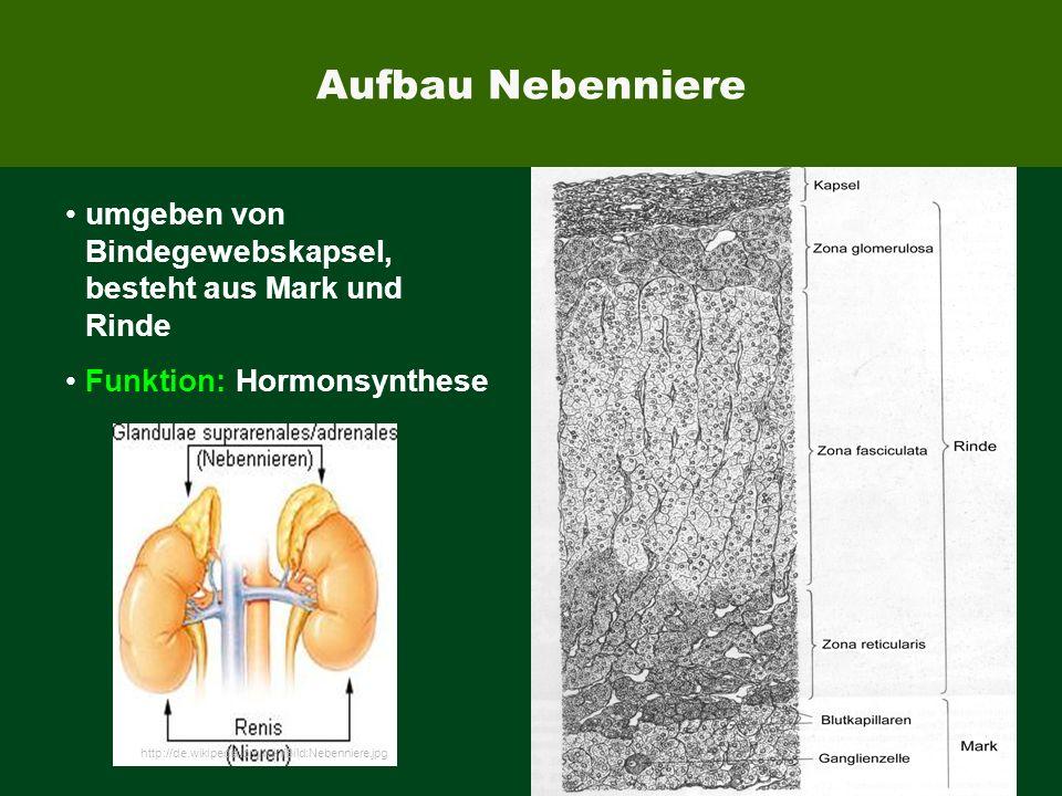 Aufbau Nebenniere umgeben von Bindegewebskapsel, besteht aus Mark und Rinde. Funktion: Hormonsynthese.