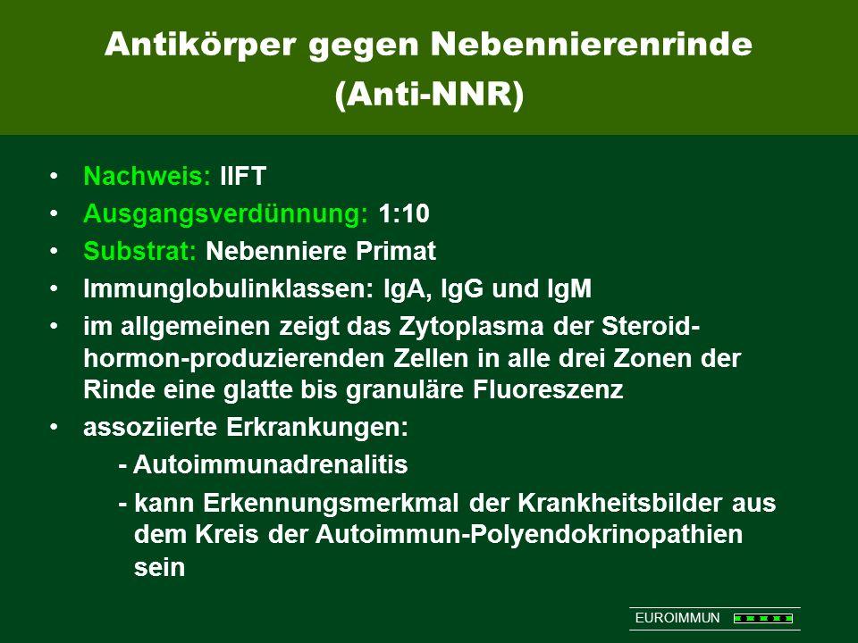 Antikörper gegen Nebennierenrinde (Anti-NNR)