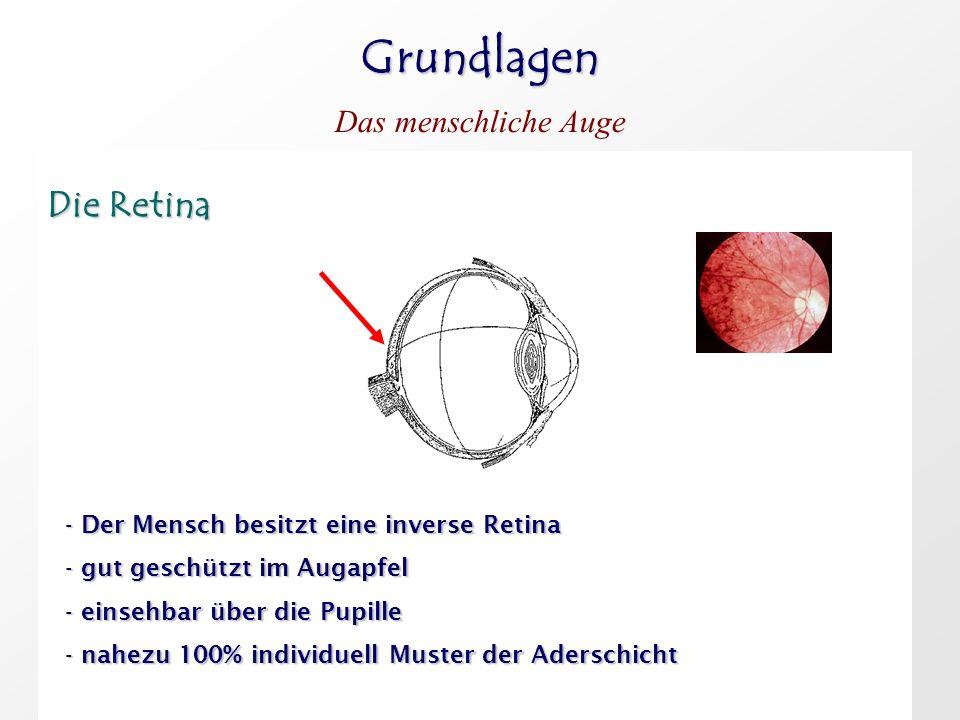 Grundlagen Die Retina Das menschliche Auge