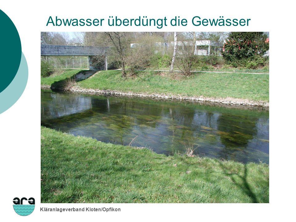 Abwasser überdüngt die Gewässer