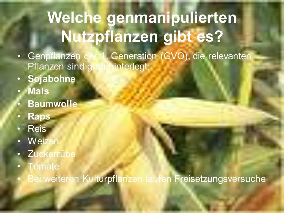 Welche genmanipulierten Nutzpflanzen gibt es