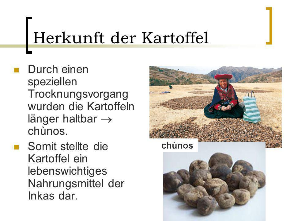 Herkunft der Kartoffel