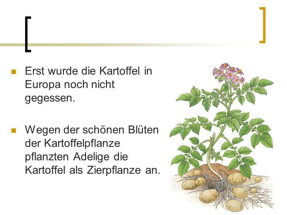 Erst wurde die Kartoffel in Europa noch nicht gegessen.