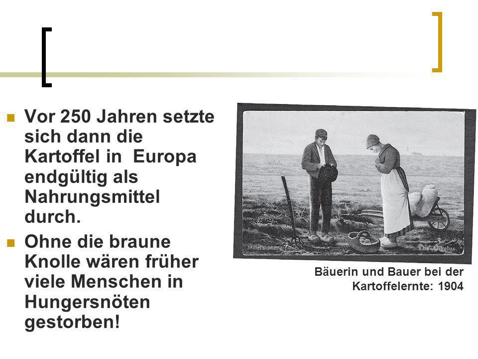 Vor 250 Jahren setzte sich dann die Kartoffel in Europa endgültig als Nahrungsmittel durch.