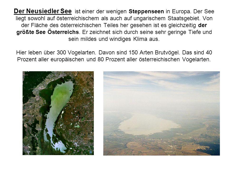 Der Neusiedler See ist einer der wenigen Steppenseen in Europa