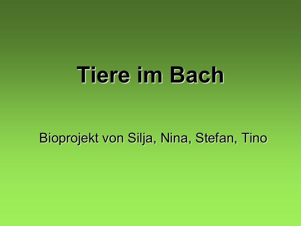 Bioprojekt von Silja, Nina, Stefan, Tino