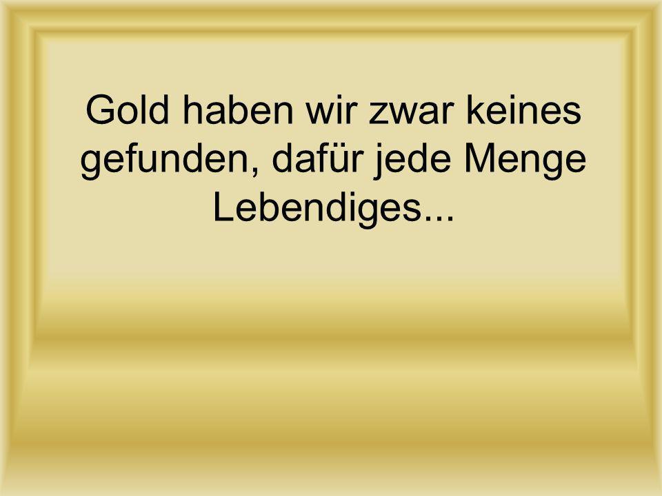 Gold haben wir zwar keines gefunden, dafür jede Menge Lebendiges...