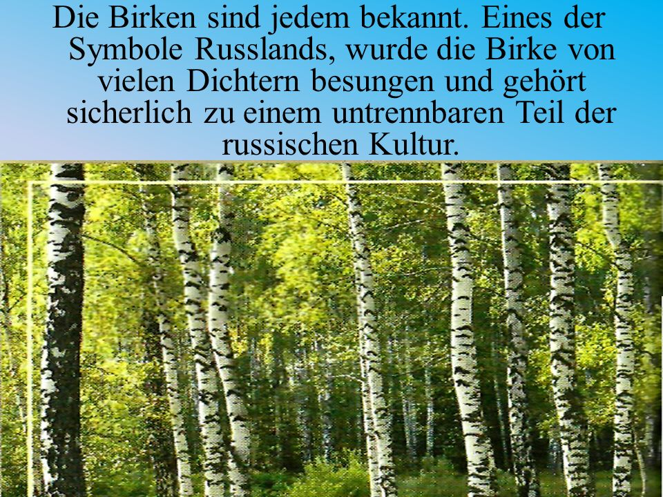 Die Birken sind jedem bekannt
