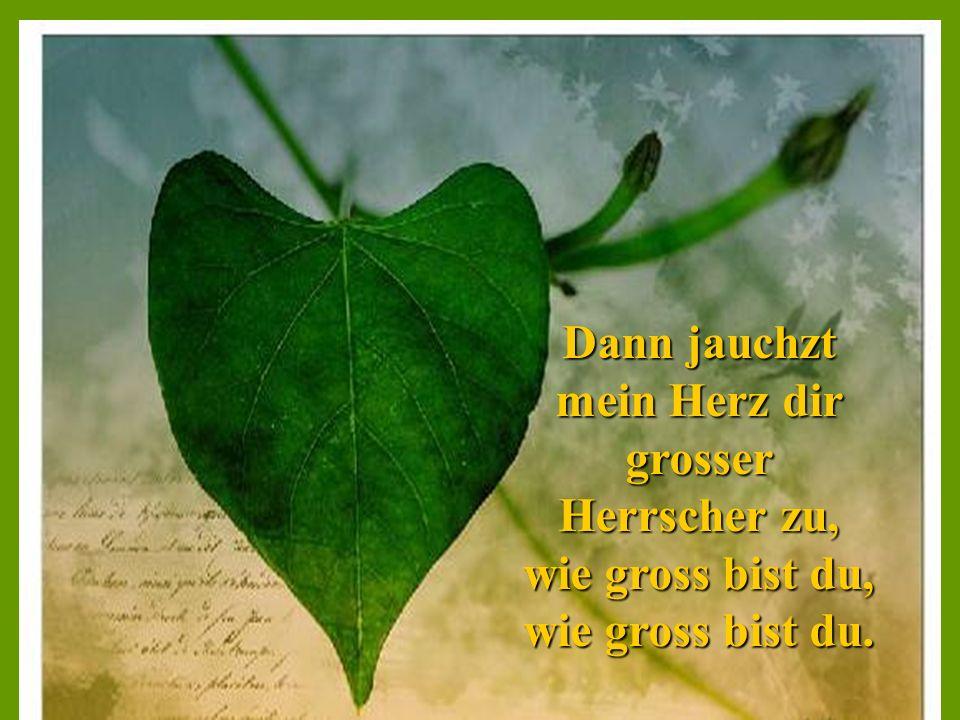 Dann jauchzt mein Herz dir grosser Herrscher zu, wie gross bist du, wie gross bist du.