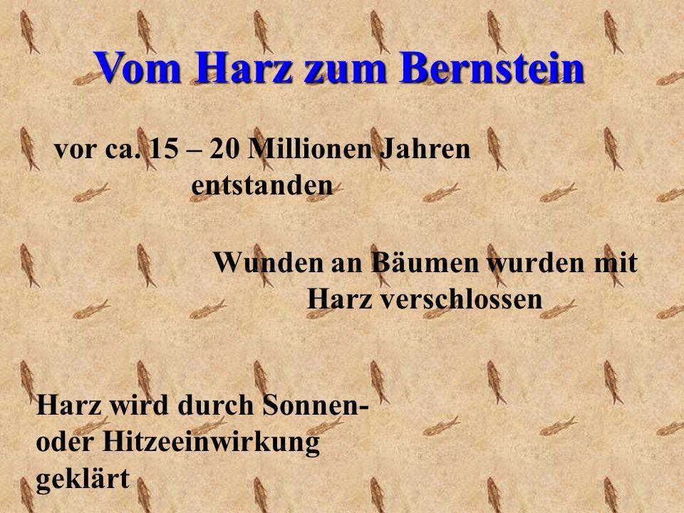 Vom Harz zum Bernstein vor ca. 15 – 20 Millionen Jahren entstanden
