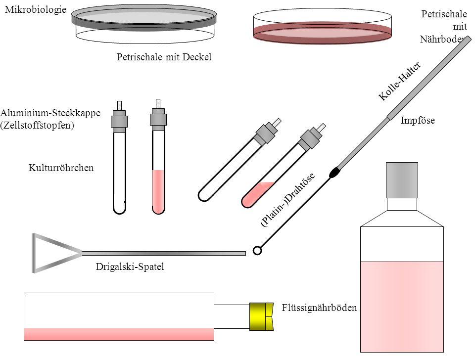 Mikrobiologie Petrischale mit Nährboden. Petrischale mit Deckel. Kolle-Halter. Aluminium-Steckkappe.