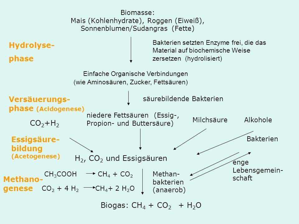 Einfache Organische Verbindungen (wie Aminosäuren, Zucker, Fettsäuren)