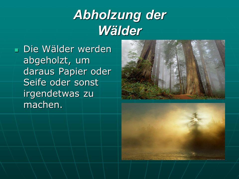Abholzung der Wälder Die Wälder werden abgeholzt, um daraus Papier oder Seife oder sonst irgendetwas zu machen.