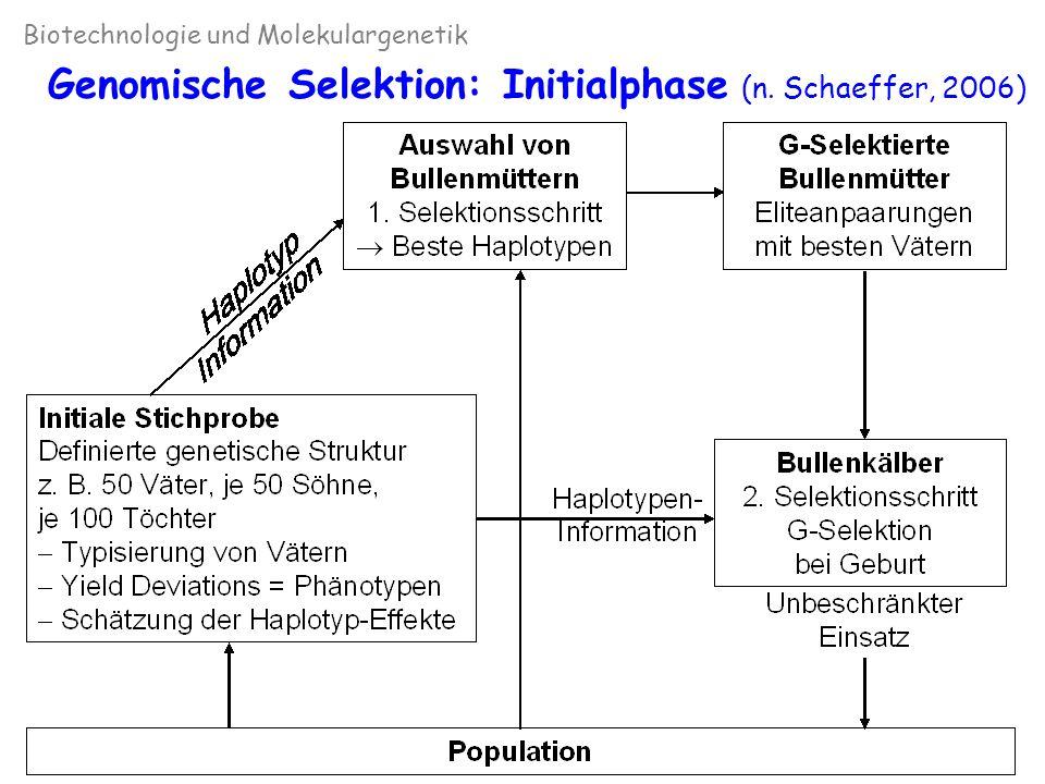 Genomische Selektion: Initialphase (n. Schaeffer, 2006)